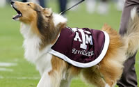 Betting on Texas A&M